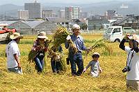 黄金の収穫祭02